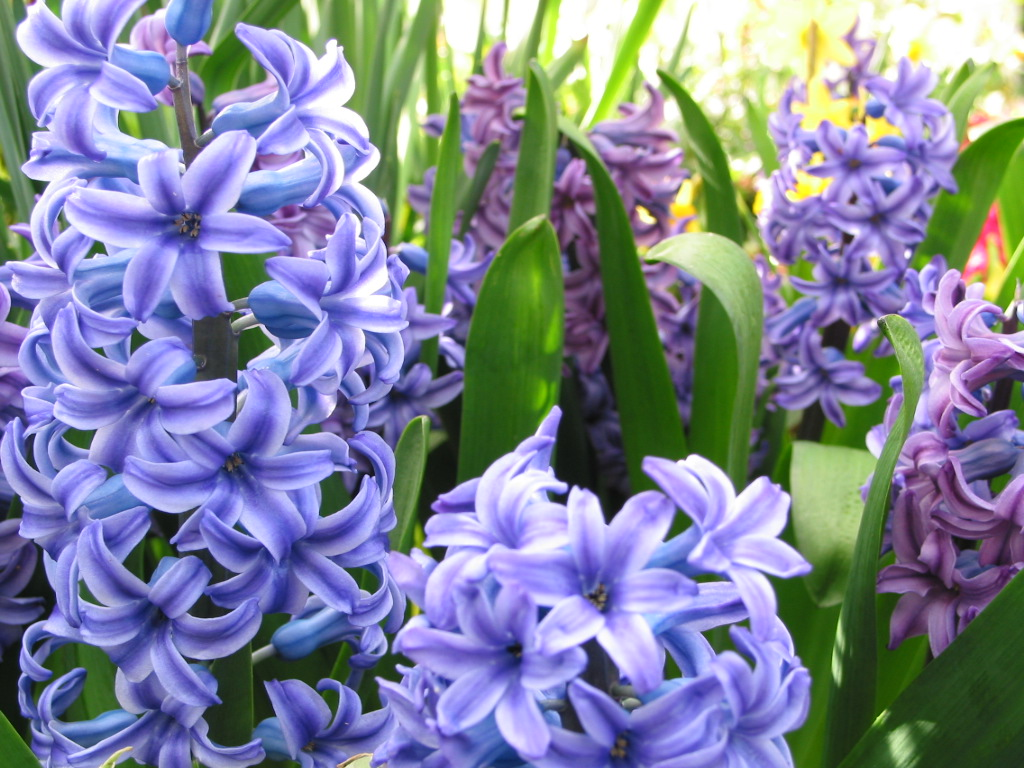 Names of blue flowers list the leah set flower vinyl name labels 30 names of blue flowers list download izmirmasajfo